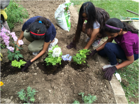 Youth are working on their community garden at a Scarborough school.